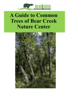 Guide to Common Trees Bear Creek Nature Center
