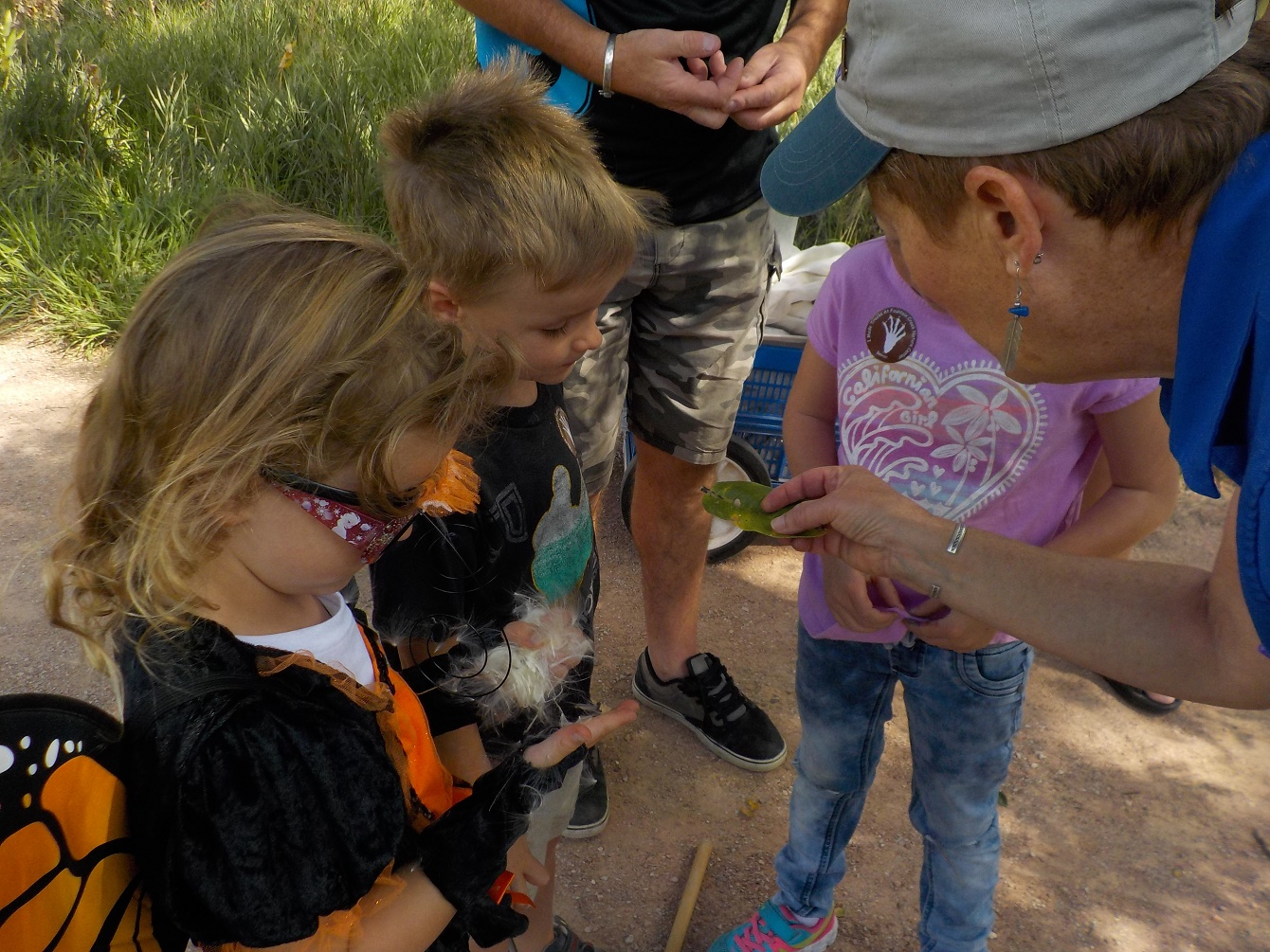 Staff shows children a milkweed leaf