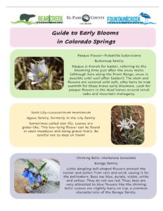 Guide to Early Blooms in CO Springs