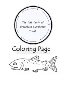 Greenback Cutthroat Trout Coloring Page