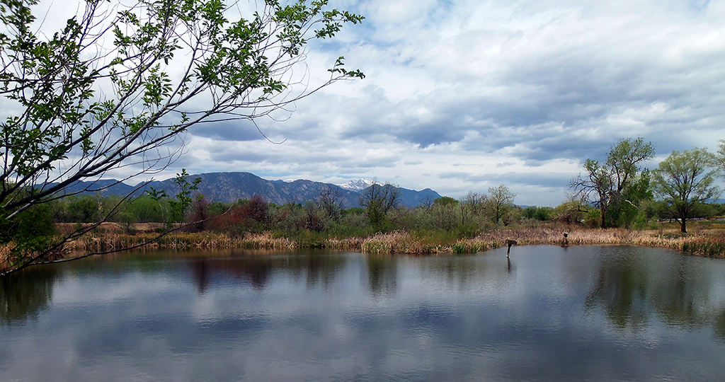Fountain Creek pond with Pikes Peak