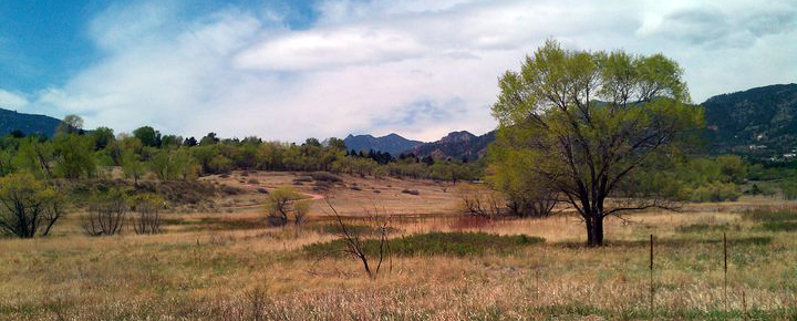 El Paso County Open Space with a Tree