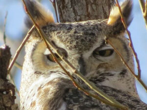 close up of owl in tree
